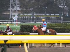 20151123 東京10R 鷹巣山特別 レーヌドブリエ 26