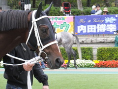 20151031 東京10R 赤富士S ショウナンアポロン 05