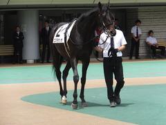 20150523 東京3R 3歳未勝利 コスモポッポ 08