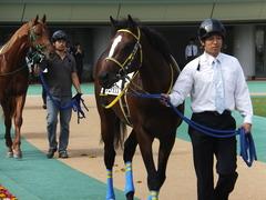 20141026 東京4R ラッシュアタック 06