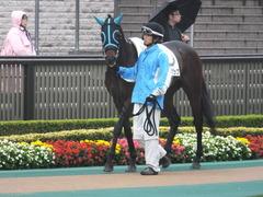 20141101 東京8R トレジャーマップ 02