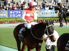 20171009 東京11R GCC (OP) ショウナンアポロン 14