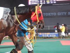 20180523 大井12R 薫風賞 B2 マイネルグルマン 16