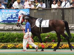 20140503 東京7R ショウナンアポロン 05