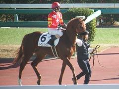 20181228 中山2R 2歳牝馬未勝利 パーフェクトワン 13