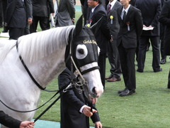 20151129 東京11R ジャパンカップ(G1) 08