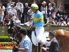 20170506 東京5R 3歳牝馬500万下 ビルズトレジャー 14