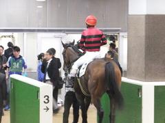 20161120 東京1R 2歳未勝利 メガポリゴン 20