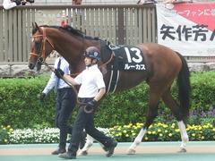 20190608 東京11R 多摩川S 3勝 ルーカス 04