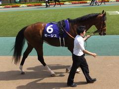 20150607 東京11R 安田記念(G1) モーリス 11