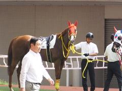 20161002 阪神8R (500) テイケイラピッド 08