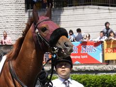 20140511 東京2R ワイルドジーク 09