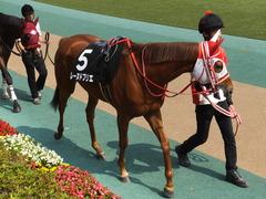 20170527 東京10R 葉山特別(1000) レーヌドブリエ 10