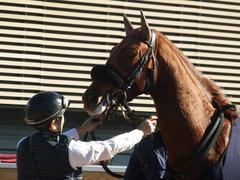 20181228 中山2R 2歳牝馬未勝利 パーフェクトワン 19