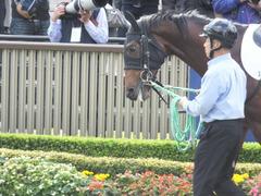 20141130 東京3R 2歳未勝利 トーセンカナロア 05