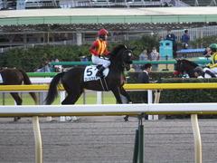 20141025 東京12R ゴールウェイ 13
