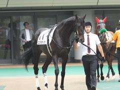 20150614 東京3R 3歳未勝利 コスモポッポ 05