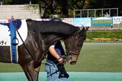 20191110 東京2R 2歳牝馬未勝利 ミヤコシャンティ 05