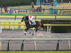20141018 東京12R ショウナンアポロン 12