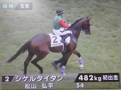 20190622 阪神5R 2歳メイクデビュー シゲルタイタン 02