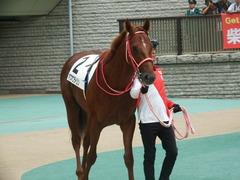 20181008 東京3R 2歳未勝利 ホウオウライジン 03