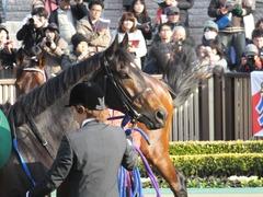 20150221 東京11R ダイヤモンドS(G3) ラブイズブーシェ 07