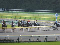 20141011 東京11R いちょうS マイネルグルマン 12