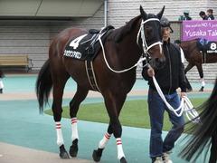20151031 東京10R 赤富士S ショウナンアポロン 04