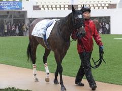 20170917 中山5R 2歳牝馬メイクデビュー ショウナンアーデン 07