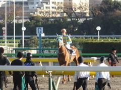 20151128 東京11R キャピタルS アルマディヴァン 11