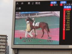 20151224 大井2R 2歳新馬 マルカンヒラリー 10