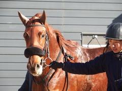 20181228 中山2R 2歳牝馬未勝利 パーフェクトワン 18