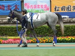 20180526 東京3R 3歳未勝利 ウェディングベール 02