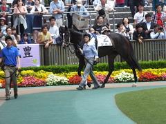 20160514 東京5R 3歳牝馬未勝利 ツボミ 04