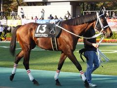20141116 東京10R ショウナンアポロン 04