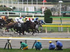 20141108 東京9R ショウナンアポロン 16