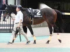 20161023 東京9R くるみ賞 2歳500万下 コウソクストレート 06