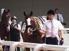 20161002 阪神5R 2歳メイクデビュー プンメリン 05