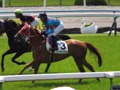 20150425 京都4R 3歳未勝利 レーヌドブリエ 15