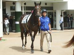 20190916 中山5R 2歳牝馬メイクデビュー バイカル 02