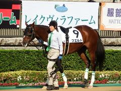 20171104 東京8R (500) プエルト 02