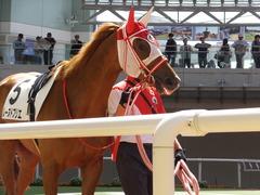 20150404 阪神4R 3歳未勝利 レーヌドブリエ 11