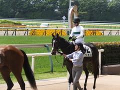 20160514 東京5R 3歳牝馬未勝利 ツボミ 18