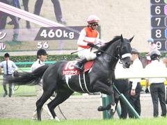 20150516 東京11R 京王杯SC(G2) ショウナンアチーヴ 14