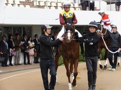 20150321 中山10R 韓国馬事会杯 ランドマーキュリー 05