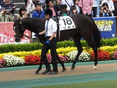 20160605 東京4R 3歳未勝利 ツボミ 12