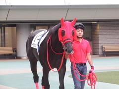 20181008 東京12R (500) ノーザンクリス 03