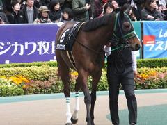 20161127 東京8R シャングリラ賞 ツクバアスナロ 03