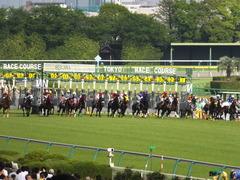 20140503 東京11R 青葉賞 ショウナンラグーン 13