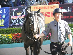 20141122 東京9R からまつ賞 ファインライナー 06